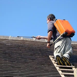 Roof Maintenance Services